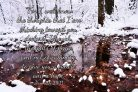 Jeremiah 29:11 Winter Scene Photographic Print or Canvas Print