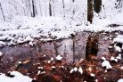 Winter Scene Photographic Print or Canvas Print