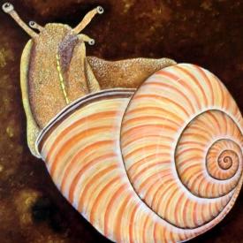 Candy Snail