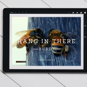 Hang In There Bee Buddy – Galations 6:9 – Digital Card