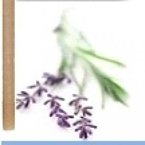 10 Pack Lavender Paraffin Ear Candles