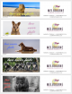 Love Never Fails BOOKMARKS for Melbourne International 2019 – Aussie Animals