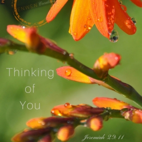 Thinking Of You, Jer 29:11 Orange Falling Star Flower INSTANT DIGITAL DOWNLOAD