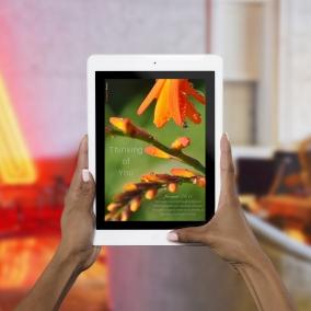 Thinking Of You, Jer 29:11 Orange Falling Star Flower Digital Card